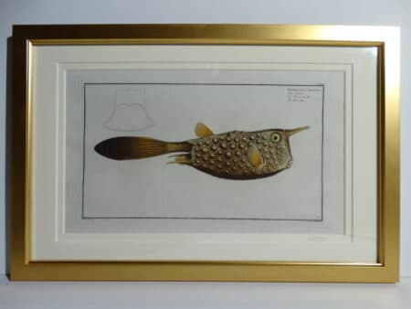 Bloch Fish Engraving Framed7
