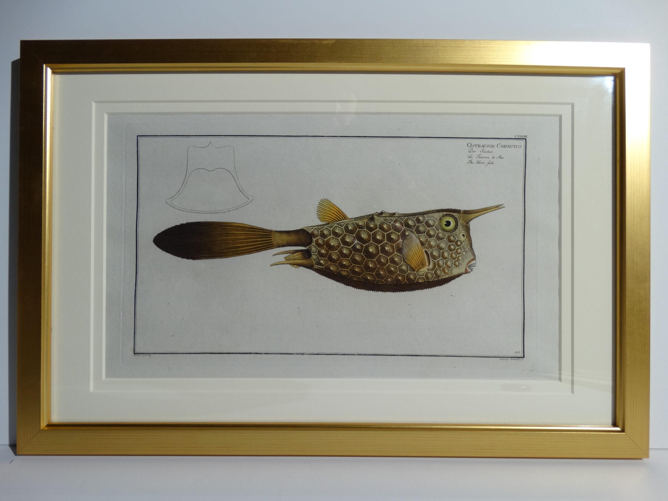 Bloch Fish Engraving Framed7