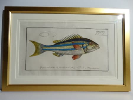 Bloch Fish Engraving Framed8