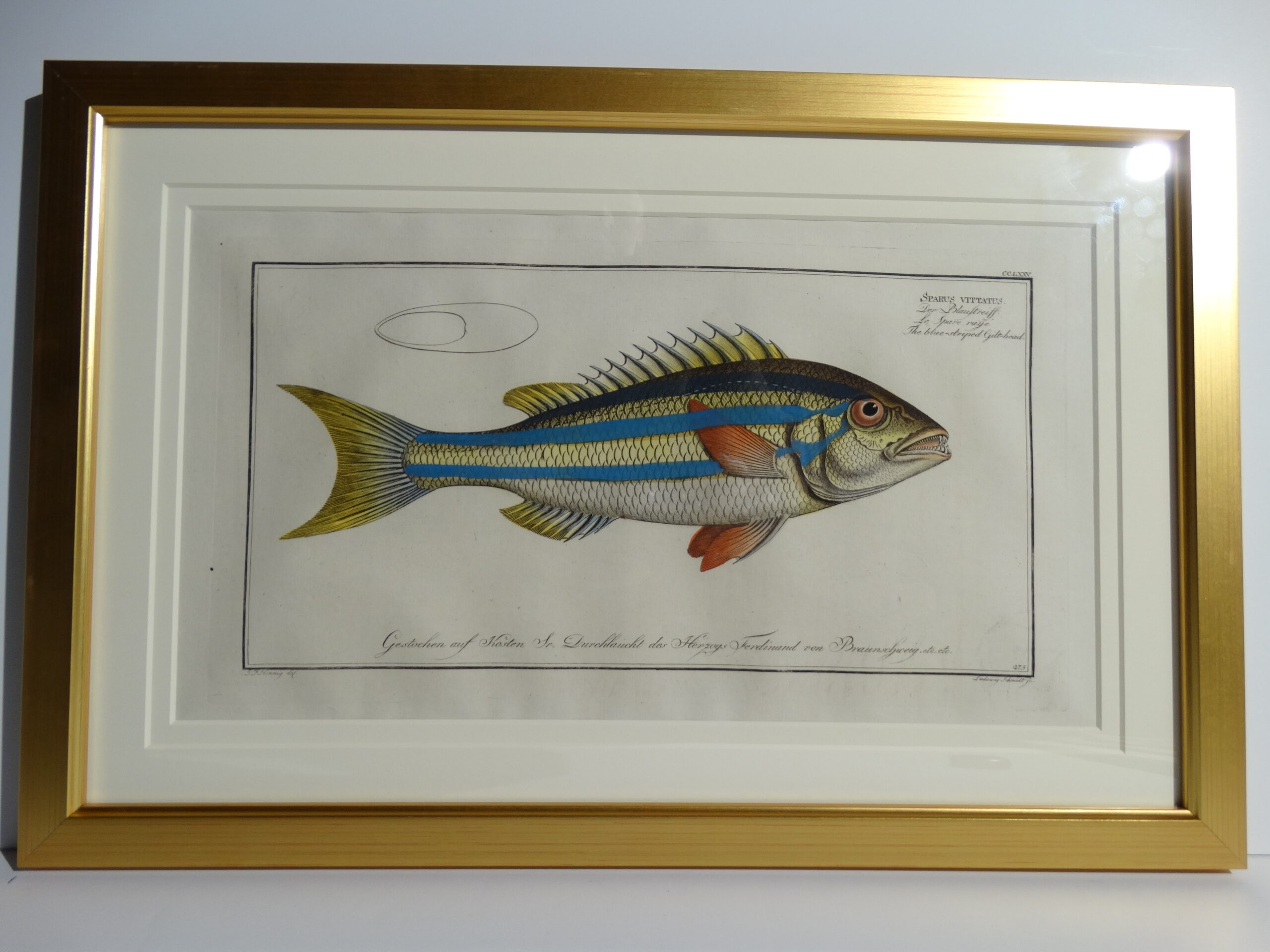 Bloch Fish Engraving Framed8