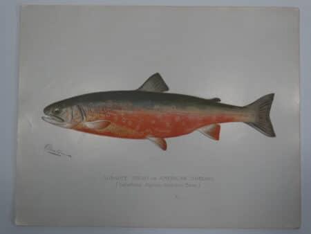 Fishing Themed Artwork