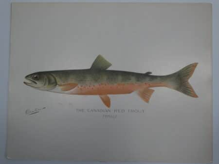 historic antique trout art