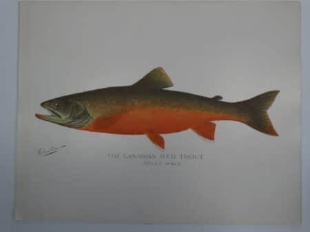 terracotta colored fish print
