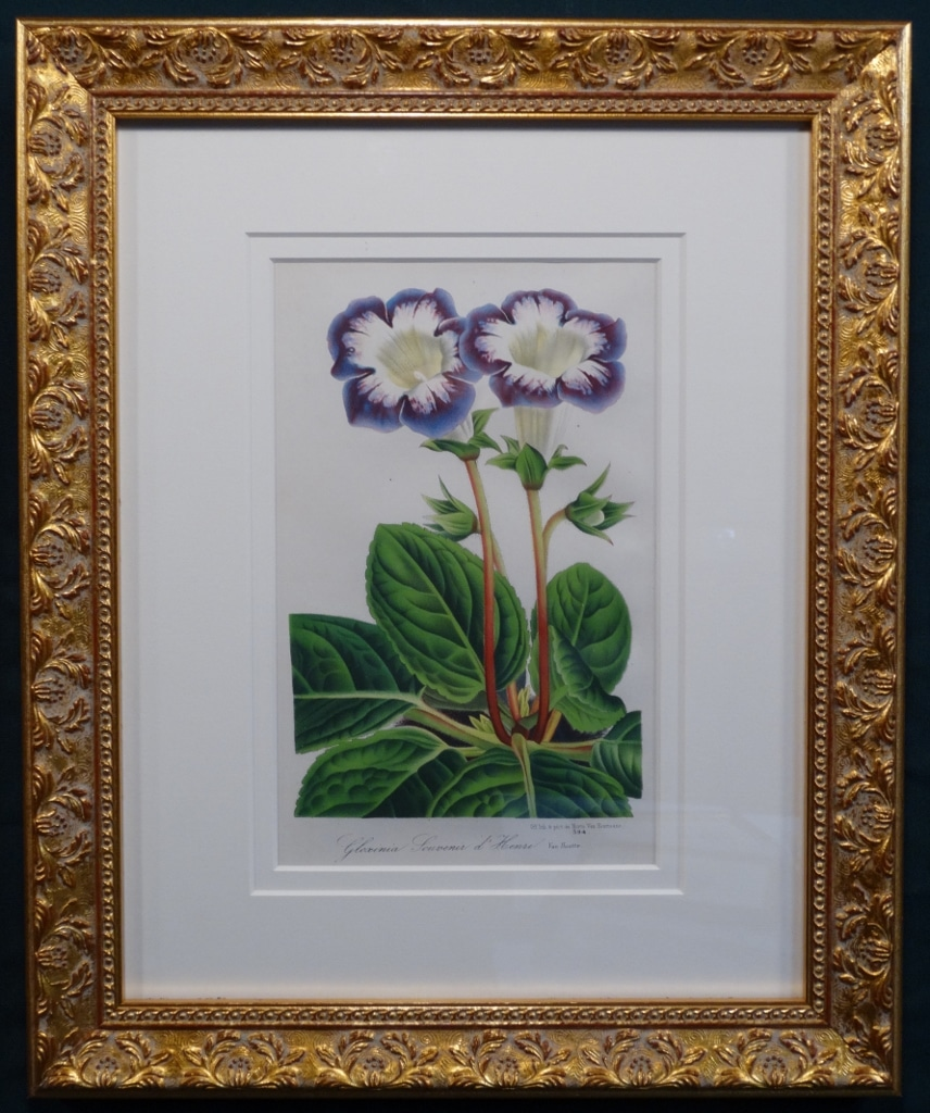 Decorative set of three antique prints of purple flowers in high end gold frames,