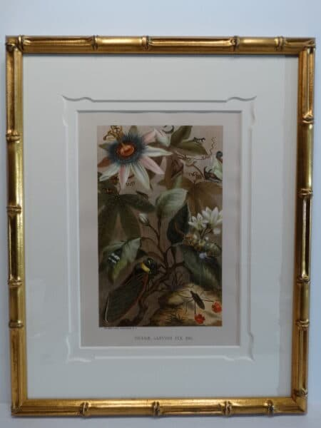 Framed in gold bamboo this set of three 19th century antique prints boast butterflies and other insects in the environment.