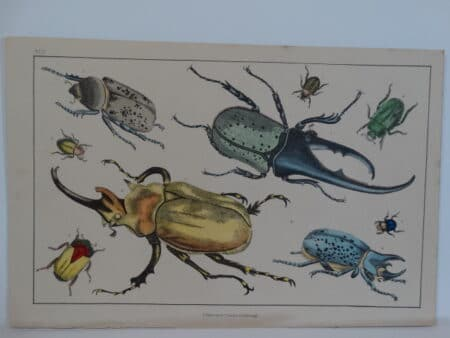 old insect prints engraving