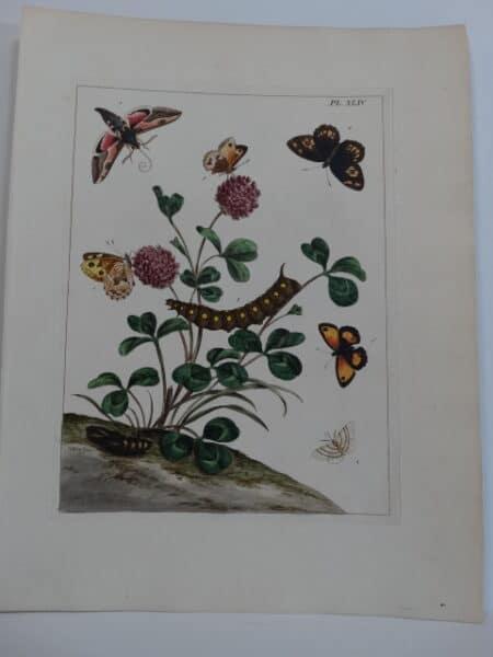 Aurelian Butterfly Society