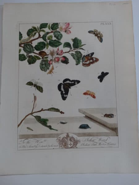 18th century insects prints