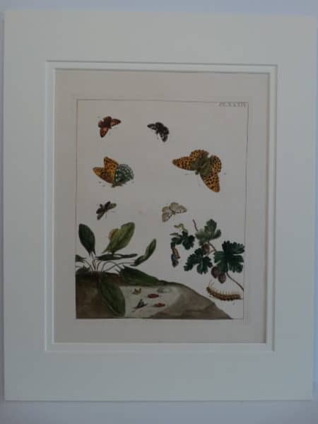 Moses Harris Butterfly Engraving