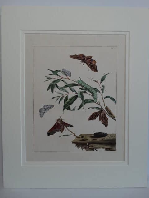 Spectacular 18th century art