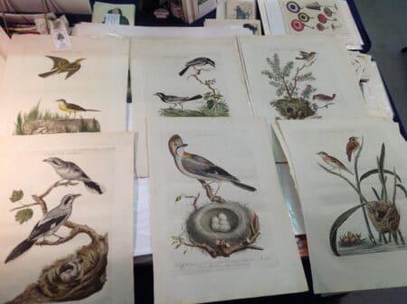Collection Nozeman Bird Prints