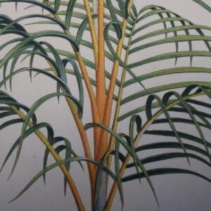 Ferns-Trees