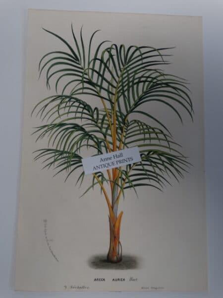 antique palm tree print