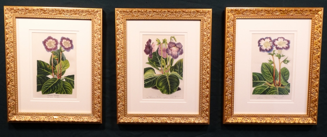 Decorative framed set of three mid 19th century antique prints of other special flowers.