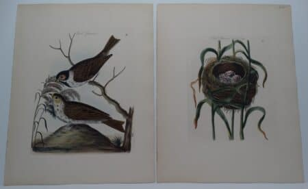 British red sparrow nest