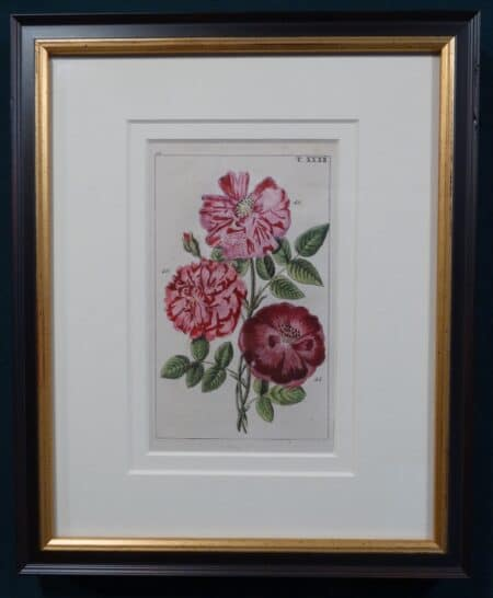 highly detailed antique rose engraving