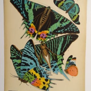 Seguy Deco Butterflies PL7