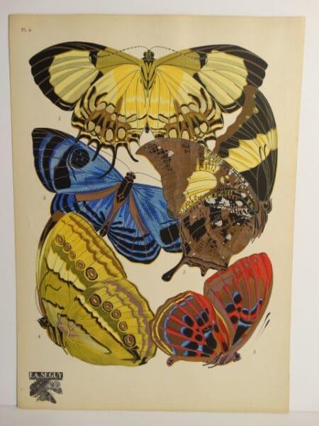 Seguy Deco Papillons PL4