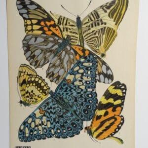 Seguy Pochoir Butterflies PL3