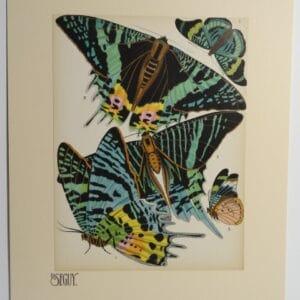 Seguy Pochoir Butterfly Design NoS7