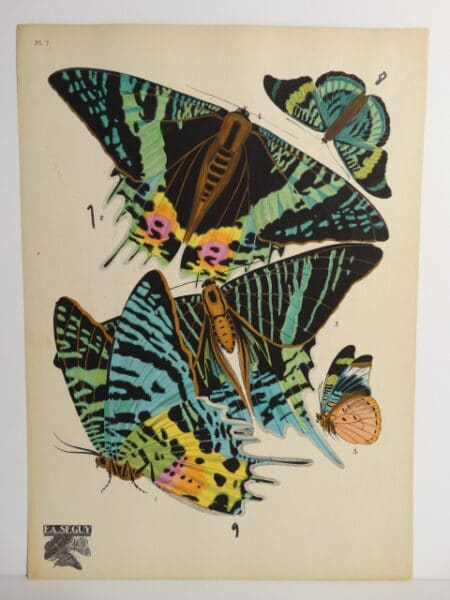 Seguy Pochoir Papillons AsIs7