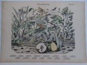 scientific caterpillars artwork