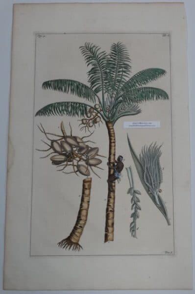 18th century palm tree art