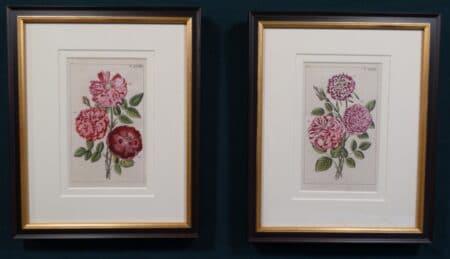 framed antique rose engravings