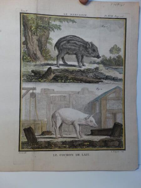 large yorkshire pig farming