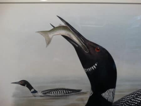 19th century art by famous ornithologist John Gould