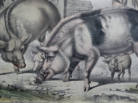 antique watercolor of barnyard farm animals
