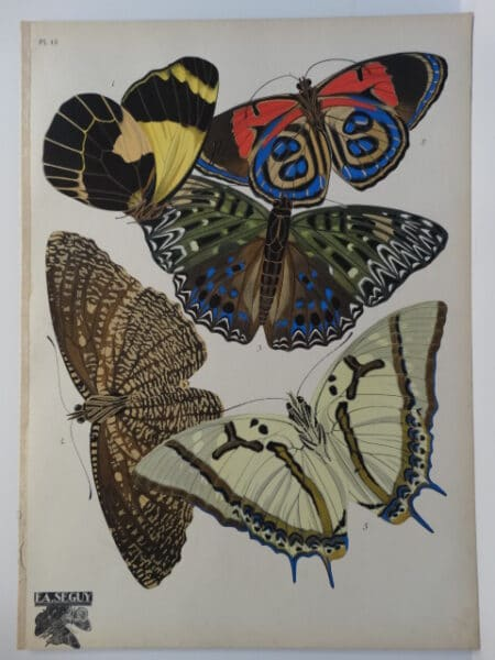 E.A. Seguy Papillons Butterfly Pl.12. French art deco pochoir painting at it's height.