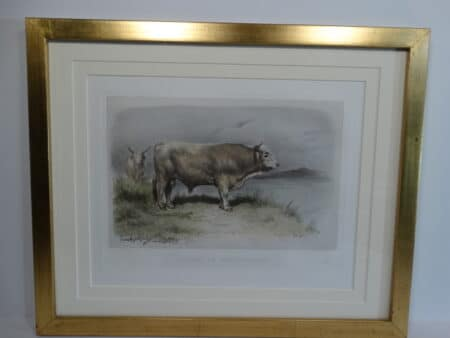 A beautifully framed West Highland cattle lithograph from the 1860's. Archival matting, UV glass and gold leaf picture frame.