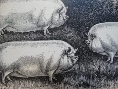 farm scenes artwork of pigs