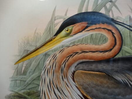 learn about John Gould antique lithographs are priced