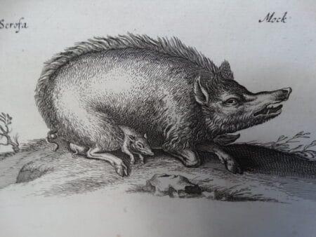 17th century animal engravings