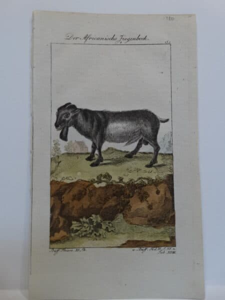 Charming trio of Compte de Buffon goat engravings published Germany late 18th century. Original watercolor copper plate engraving on hand made laid paper.
