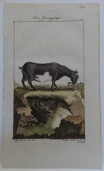 Charming trio of Compte de Buffon goat engravings published Germany late 18th century.