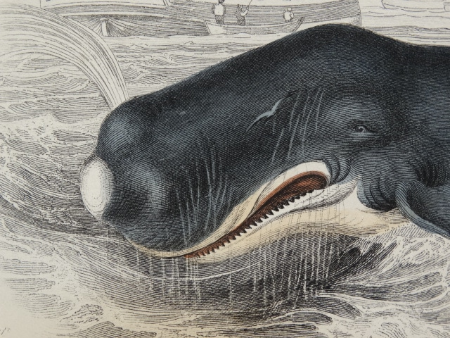 Find historic scenes with whales from centuries ago.