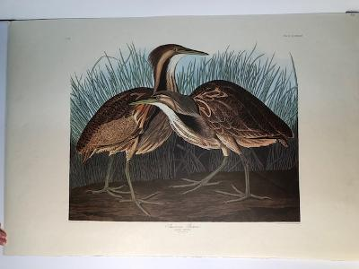 "Bitterns from the valuable Amsterdam edition of John James Audubon ""Birds of America"" 1971. Dutch Elephant folio photolithographs on ""Zonen"" watermark paper. 250 copies published."