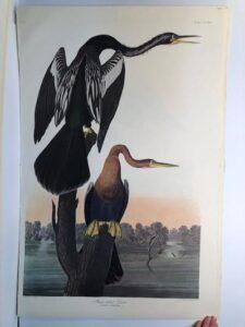 "Cormorants Gannets from the Amsterdam elephant folio edition of John James Audubon ""Birds of America"" 1971. Dutch photolithograph, ""Zonen"" watermark paper, 250 copies published."