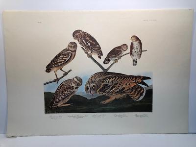 "Owls from the valuable Amsterdam edition of John James Audubon ""Birds of America"" 1971. Dutch Elephant folio photolithographs on ""Zonen"" watermark paper. 250 copies published."