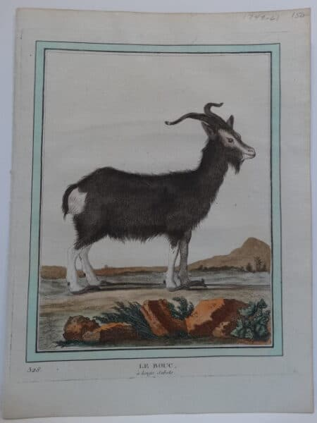 Cows Goats Sheep. Originally water colored copper plate 18th century engraving on hand made paper from Compte de Buffon's Histoire Naturelle.