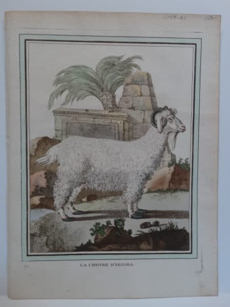 Cows Goats Sheep. Originally water color copper plate 18th century engraving on hand made paper fromCompte de Buffon's Histoire Naturelle.