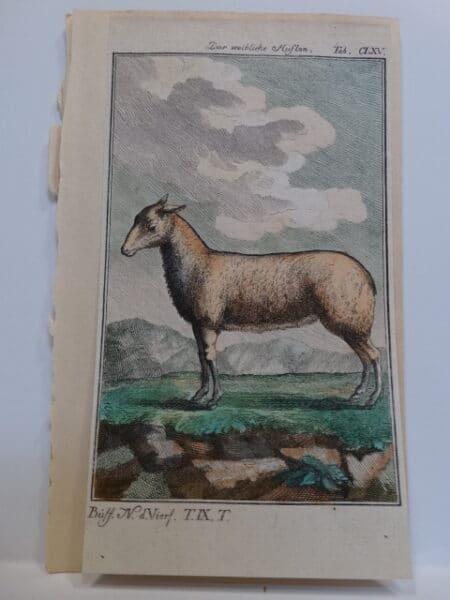 220 year old engraving of feminine or womanlike animal