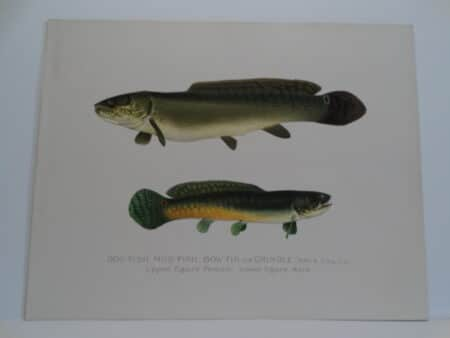Antique Sherman Denton Fish prints over 100 years old.
