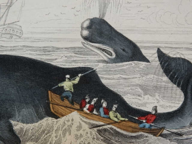 Find authentic antiques to do with whaling.