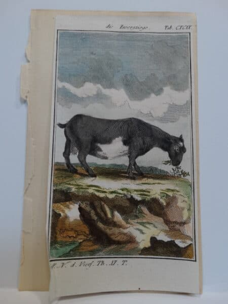 3 1/4 x 6 inch 220 years old watercolor engraving.