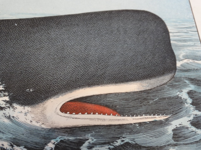 Your source for whale prints over 100 years old.