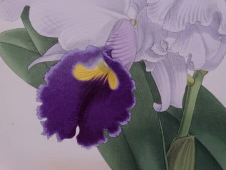 Surround yourself with authentic antique hand-colored lithographs of orchids from the late 19th century.